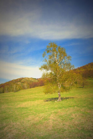 Beautiful landscape with birch on the field Stock Photo - 35231711
