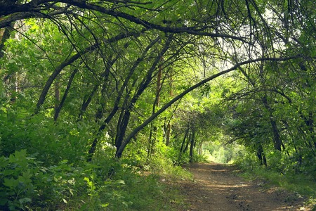 Way in summer forest photo