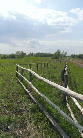 medow: Beautiful rural summer landscape