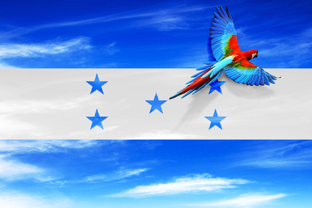 HONDURAS, CENTRAL AMERICA, Independence Day, 15 September - Manipulated image of national bird flying over Honduras flag.