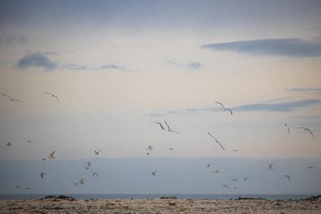 Flock on birds in mid flight on Paarden Eiland Beach at sunrise.
