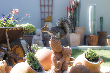 Squirrel playing in the garden in Hout Bay, Cape Town.