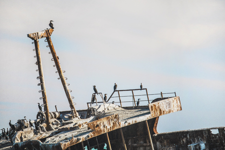 Rusted shipwreck on the shore with Cape Cormorant birds.