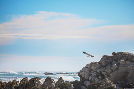 Sea gull in the foreground, focusing on the rock and waves in the background.