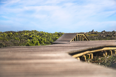 Wooden walkway surrounded by nature and a cloudy blue sky.