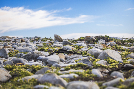 Pebbles on a beach on a warm summers day. Stock Photo