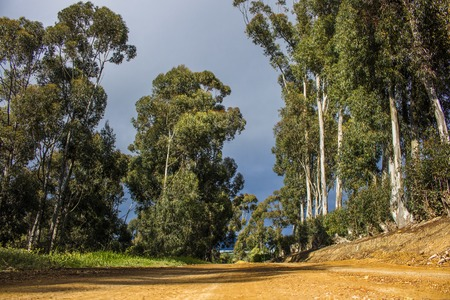 Rural dirt road surrounded my trees on a moody day -  Napier, Western Cape, South Africa.