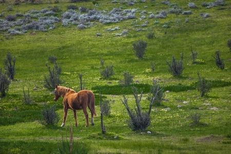 Mare horse walking through a green field on a farm.