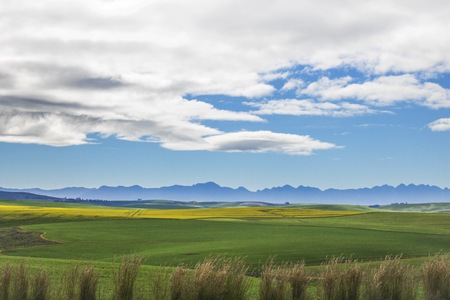Beautiful rolling green and yellow fields with mountains in the distance with blue sky and clouds. Caledon, Western Cape, South Africa. Stock Photo