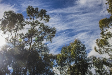 Blue wispy skies with green trees. Napier, Western Cape, South Africa.