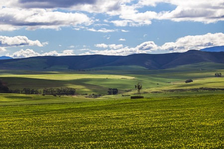 Rolling green agricultural fields  with a windmill and mountains in the background - Caledon, Western Cape - South Africa.
