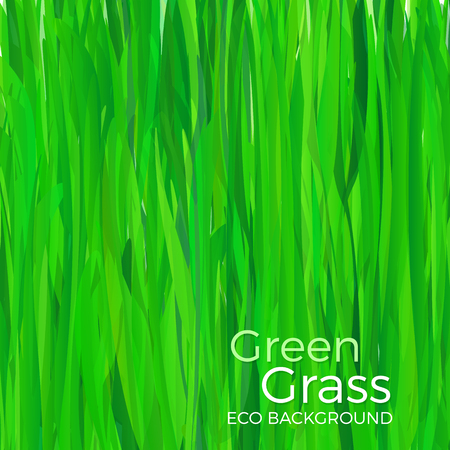 Green grass vector background Illustration