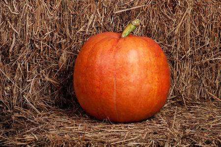 haymow: one autumn pumpkin on a wooden background