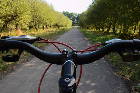 The steering wheel of a bicycle riding on an asphalt road leaving in perspective on the background of an orchard. Photographed only the handlebars, not the whole bike Imagens