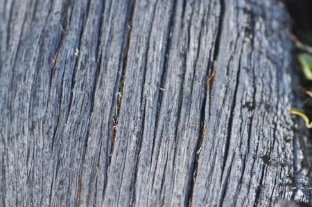 Texture the surface of wood. Deep cracks on the trunk of the old larch.