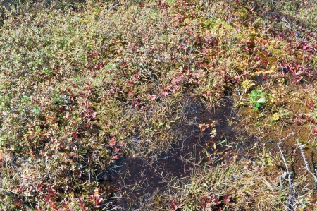 differs: Vegetation on the glade. The nature of the vegetation in the North differs from the South.