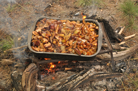 Fried mushrooms. The pan with yellow boletus stands on a stand over the fire.
