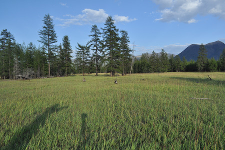 Green meadows in mountain valley of the river Suntar  Russia, Yakutia, A Ridge Of Suntar-Khayata