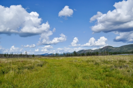peaty: Northern landscape  Swampy plain under the blue sky with rare trees and mountains on the horizon