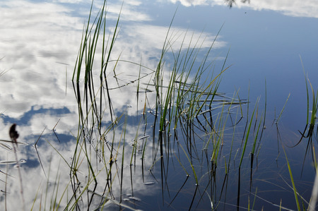 emphasizes: The grass in the water  Slim graphics stems emphasizes the color contrast