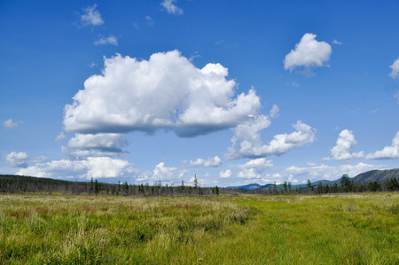 peaty: Northern landscape. Swampy plain under the blue sky with rare trees and mountains on the horizon. Stock Photo