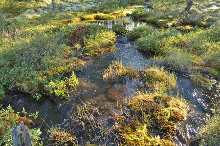 Brook. The water is cold, because in Yakutia streams touch the permafrost.