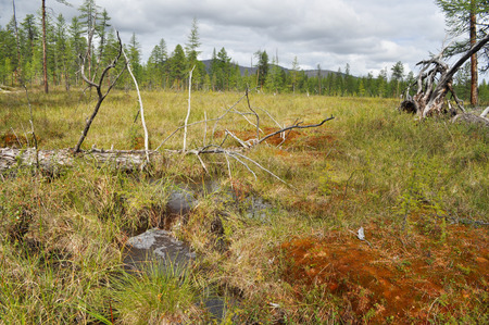 Waterlogged edge of the larch taiga in Yakutia  Ridge Suntar-khayata, river Suntar, Russia