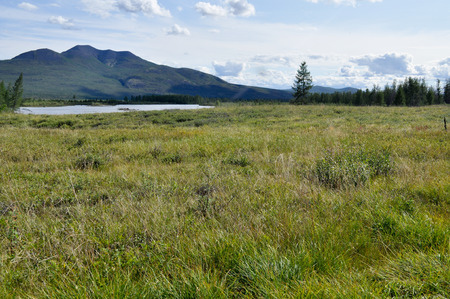peaty: Swampy plain under the blue sky with rare trees and mountains on the horizon.