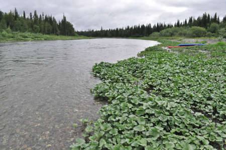 boreal: Northern boreal river. The river of the polar Urals in the Republic of Komi, Russia. Stock Photo