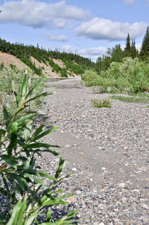 western slope: Summer landscape North of the river. River Kokpela flows on the Western slope of the Polar Urals.