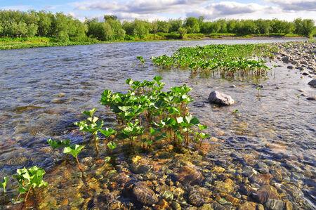 The coast North of the river in the summer. River Kokpela, Polar Ural, Komi Republic, Russia. Stock Photo