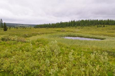 Marshy tundra near the river Lemva in the polar Urals. The Republic Of Komi, Russia.