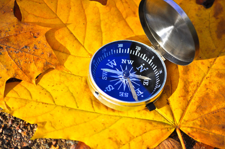 Compass among the autumn leaves. The navigation device on the background of fallen leaves in the forest.