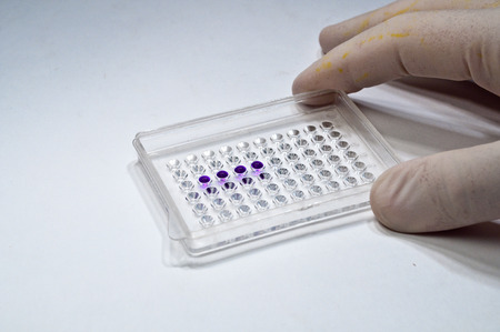 investigated: In biological research laboratories. The wells and printed samples of the investigated material.