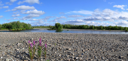 urals: Panoramic river landscape in the polar Urals. Summer in the Russian North is short and beautiful.