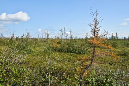 foothill: Foothill forest tundra in the Western Putorana plateau. Tundra on the Taimyr Peninsula. Stock Photo
