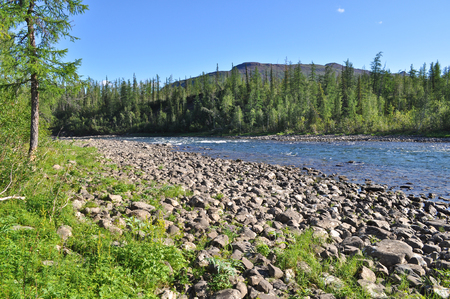 fluvial: Pebble river Nakta on the Putorana plateau. Water summer landscape of the Siberian mountain rivers.