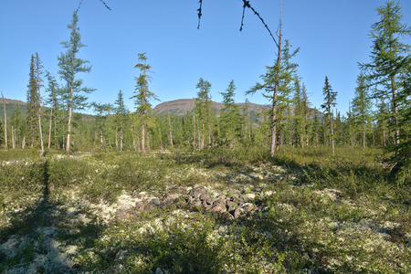 foothill: Foothill forest tundra. Summer landscape of the mountain taiga on the Putorana plateau in Russia.