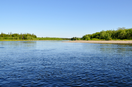 boreal: Coast Northern boreal river. River Polar Urals on a Sunny summer day.