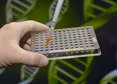metodo cientifico: En el laboratorio biom�dica. El estudio de la muestra biol�gica en una placa de pocillos.