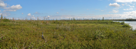 tundra: Panorama of the East Siberian tundra. The summer tundra landscape in the area of the Putorana plateau. Stock Photo