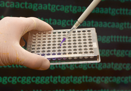 metodo cientifico: DNA testing in a scientific laboratory. The study of biological sample in a well plate.