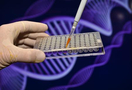 metodo cientifico: Un experimento científico en el laboratorio. El estudio de la muestra biológica en una placa de pocillos.