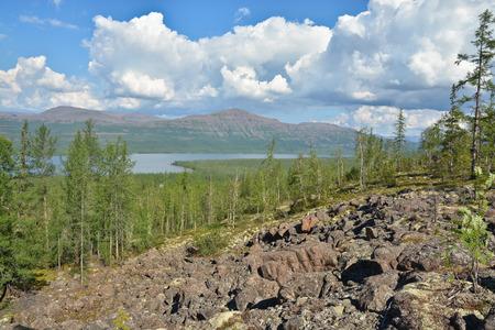the taiga: Mountain taiga on the Putorana plateau. Siberian taiga landscape on a summer day.