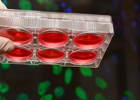 Well plate with culture medium. Cell technologies in biological research.