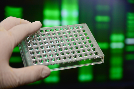 pcr: Well plate in the lab. Scientific research in the modern biological laboratory.