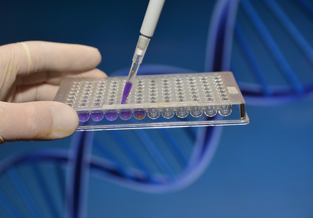 depositing: DNA testing in the laboratory. Depositing biological samples in a well plate. Stock Photo
