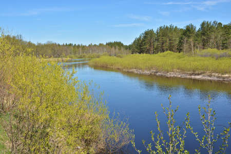 beautiful location: May on the forest river. Spring river landscape in the national Park of Central Russia.