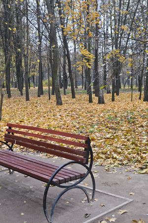 Bench in the autumn Park. Oktyabr in a city Park when the fall leaves.