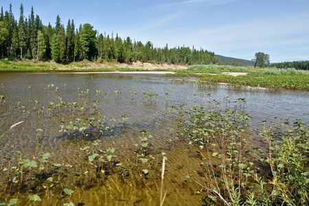 urals: The Shchugor river in the Northern Urals. National Park Yugyd VA.